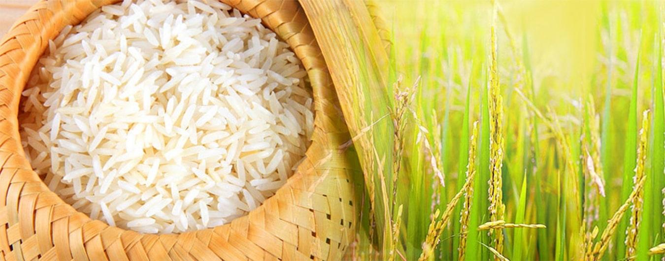 Đại lý gạo Thái Tâm